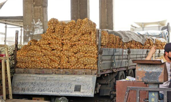 Kurdistan potatoes
