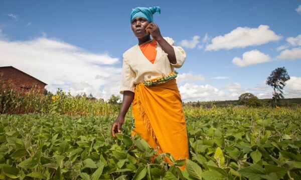 Female farmer in field