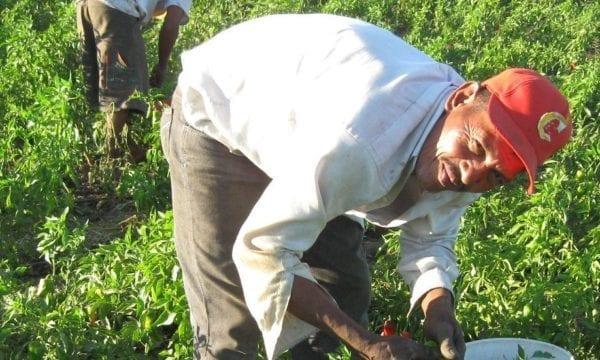 Nicaragua farmer in the field