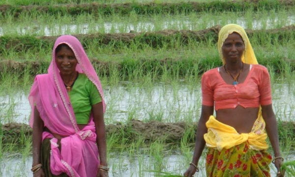 two ladies in a rice field