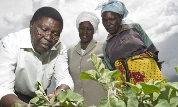 Plant clinics in Africa