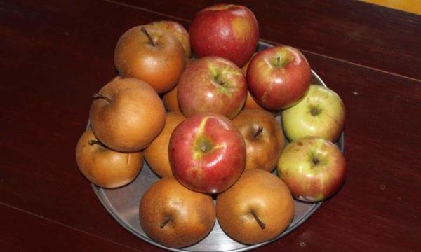 Harvested apples in DPR Korea