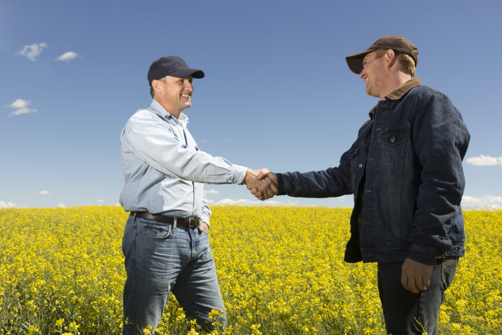 An image of two farmers in a canola field shaking hands.