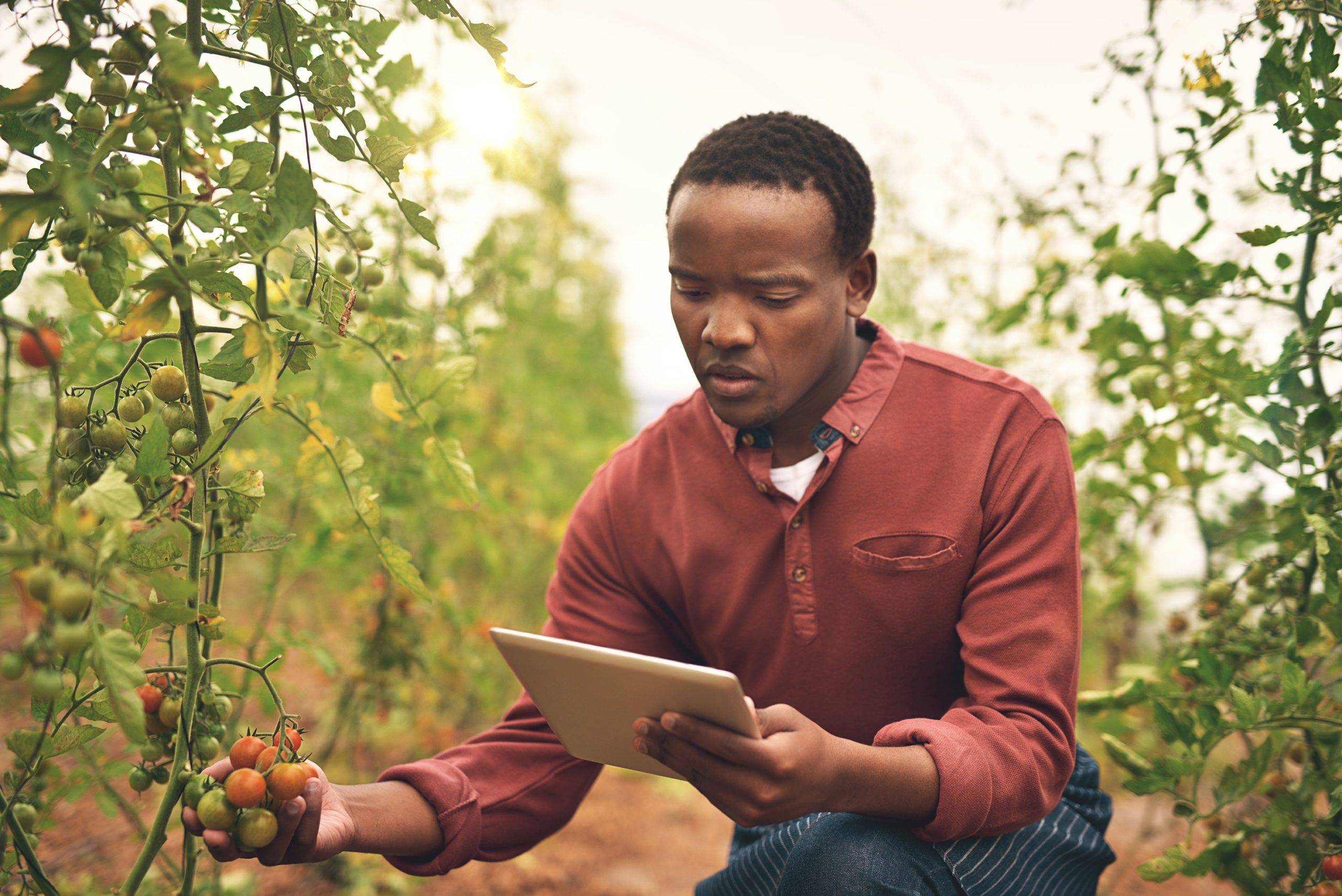Cropped shot of a handsome young male farmer using a tablet while checking his crops