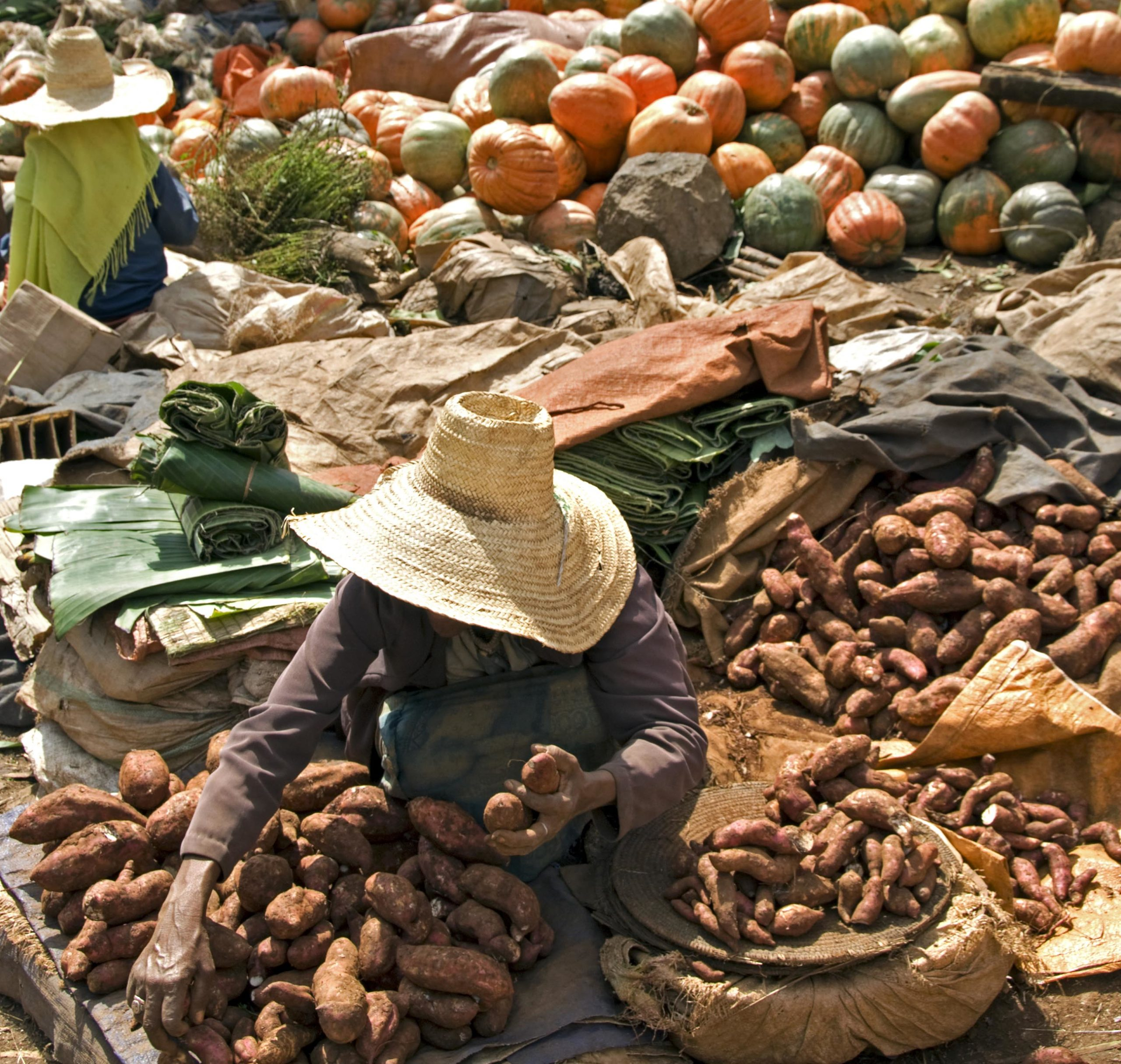 Food security, nutrition and planetary health