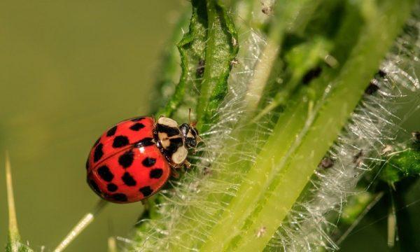 ladybug-3442106_1280