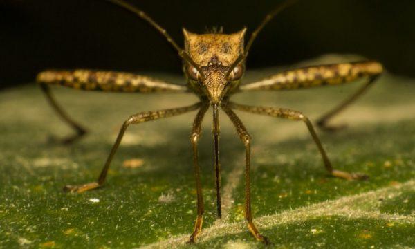 mosquito-1652561_1280