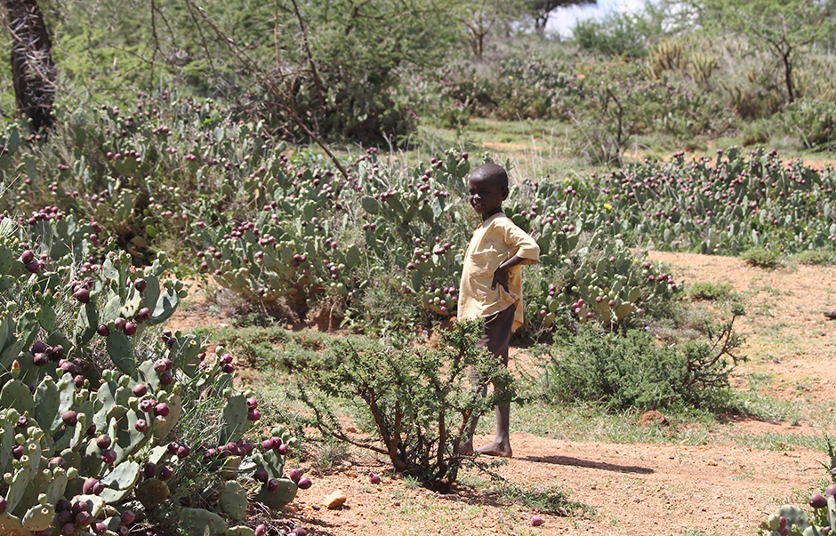 A young boy surrounded by opuntia in northern Kenya