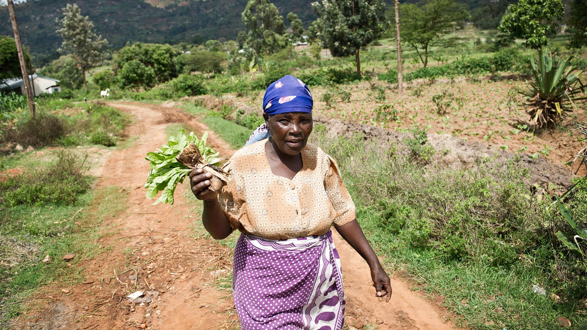 A female African farmer holding a crop sample