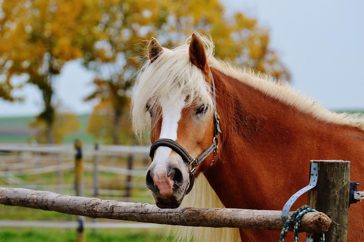 Horse-1006349_1280