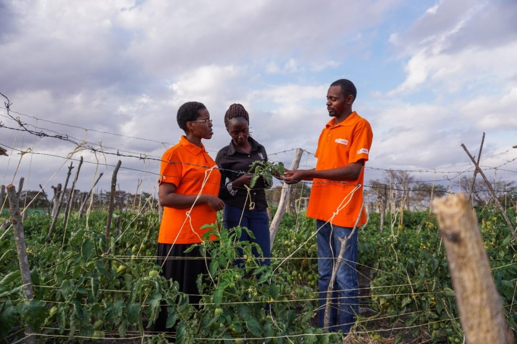 CABI staff explain to a farmer how biological control can alleviate the Tuta problem on her farm