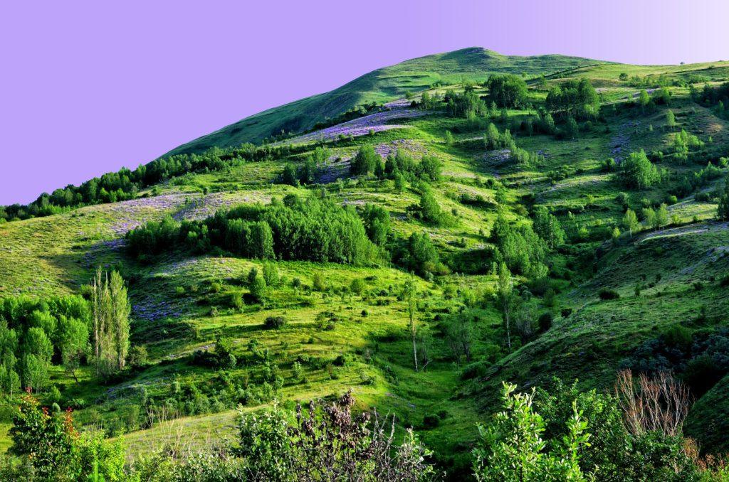 The Climate Battleground: Grassland or Forest