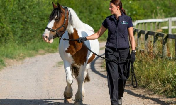 Vet walking with horse