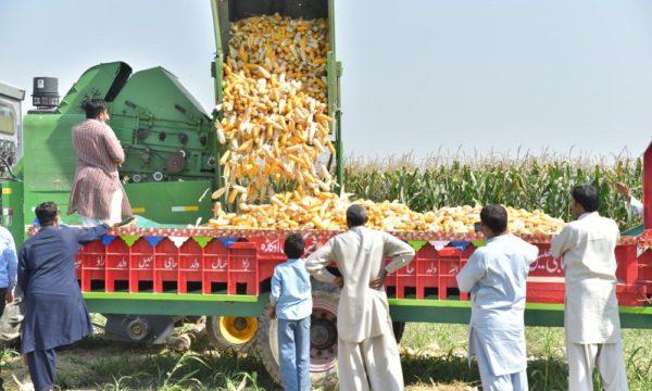 Cob picker Pakistan