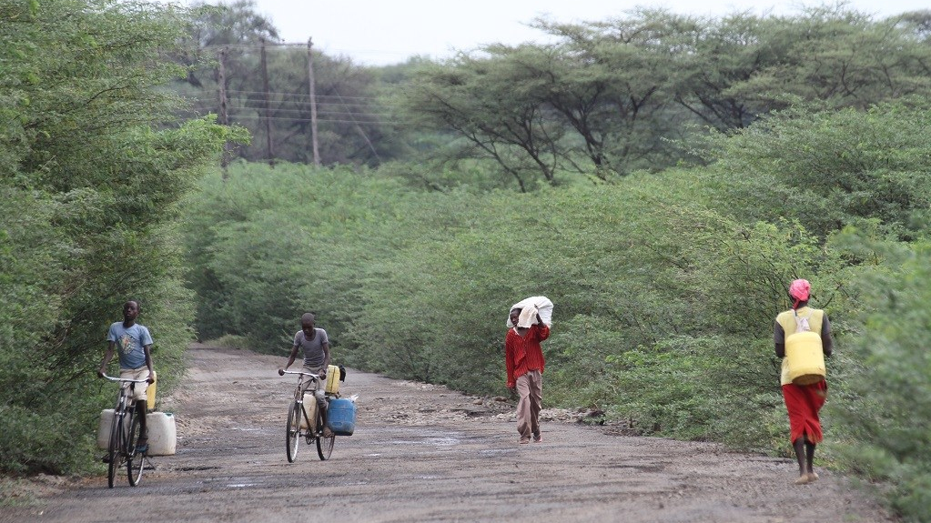 People in Kenya cycle and walk on a road completely surrounded by invasive prosopis bushes and trees
