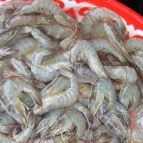 Plate of uncooked whiteleg shrimp