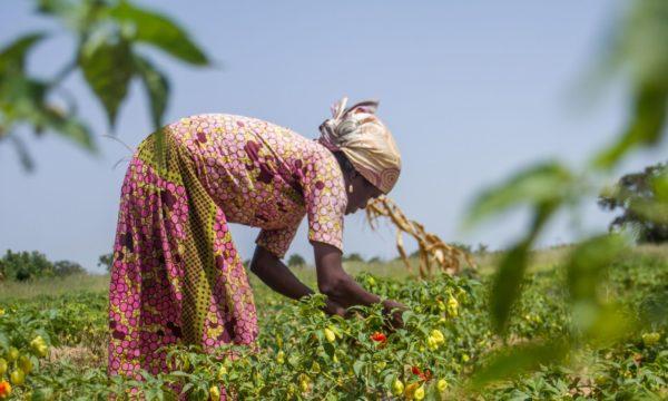 Farmer working in a field