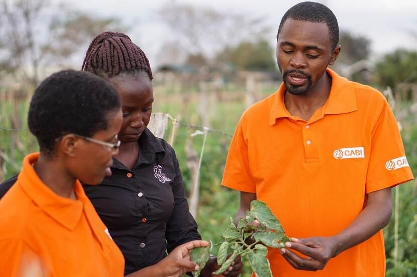 CABI plant doctors