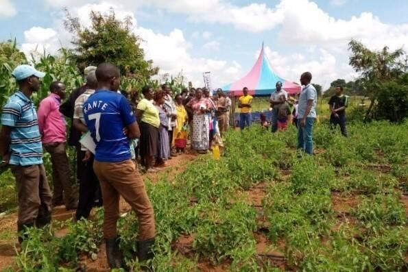 Farmers in Kenya attending a field day