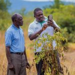 A plant doctor and farmer in Zambia use a tablet in the field to analyse a tomato crop.