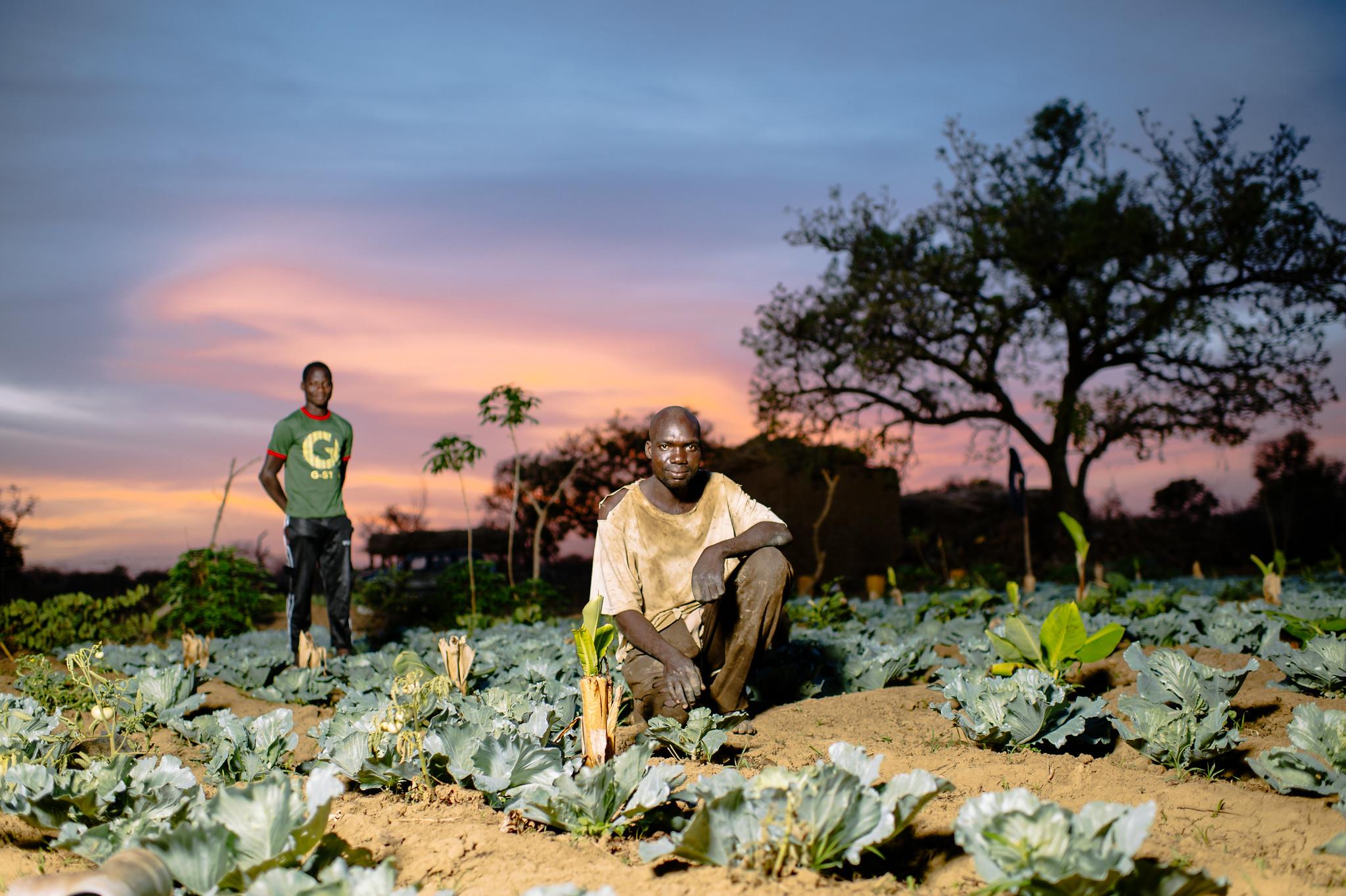Garden of Sanfo Karim, Burkina Faso.jpg