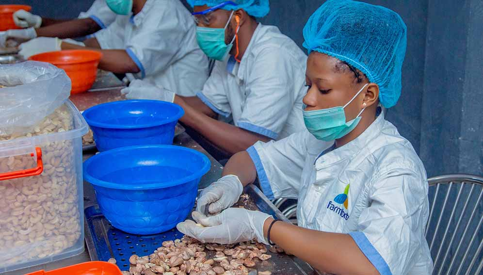 Workers in Nigeria prepare cashew nuts ready for packaging and exporting.