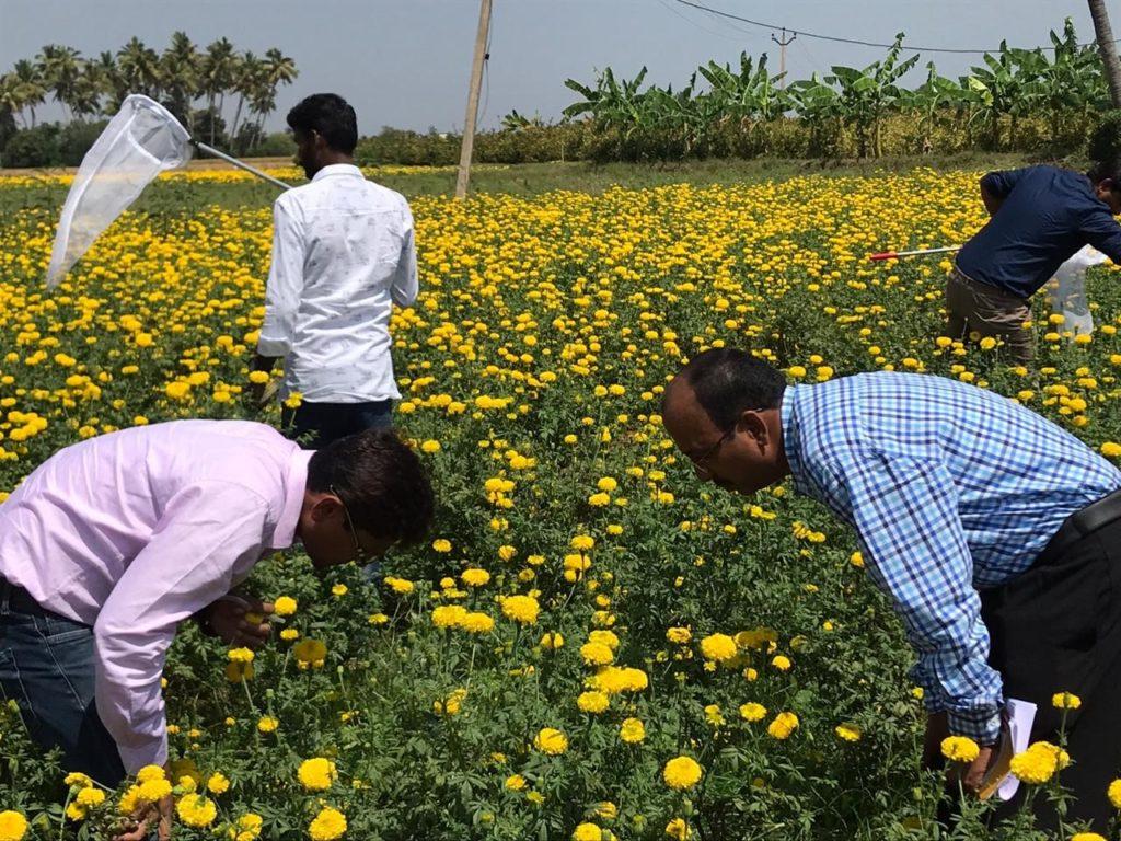 India Plant Doctors