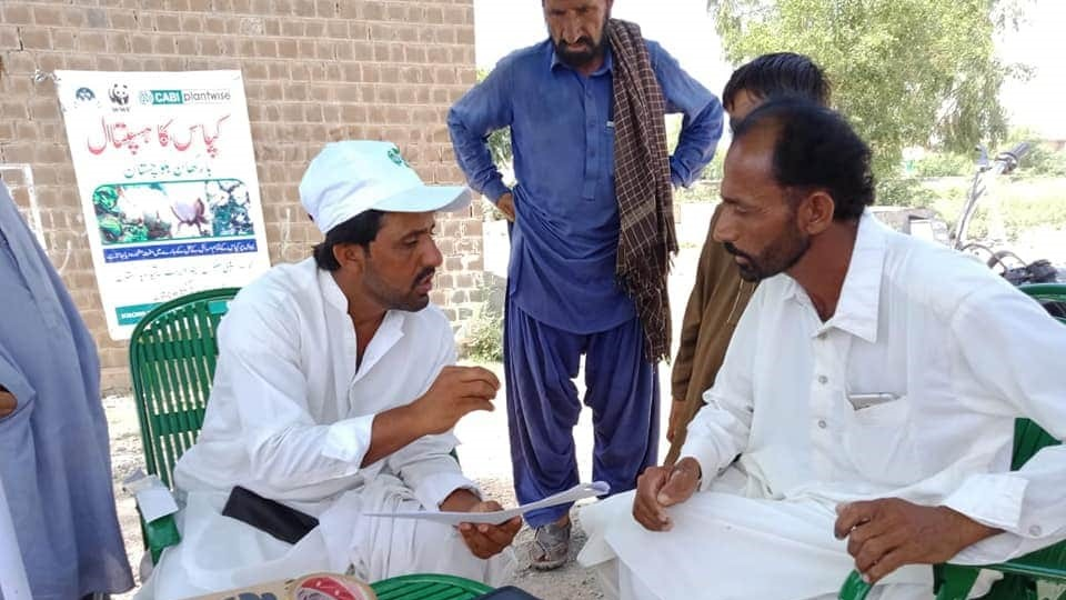 CABI plant doctors advise cotton growers at a plant clinic in Balochistan.