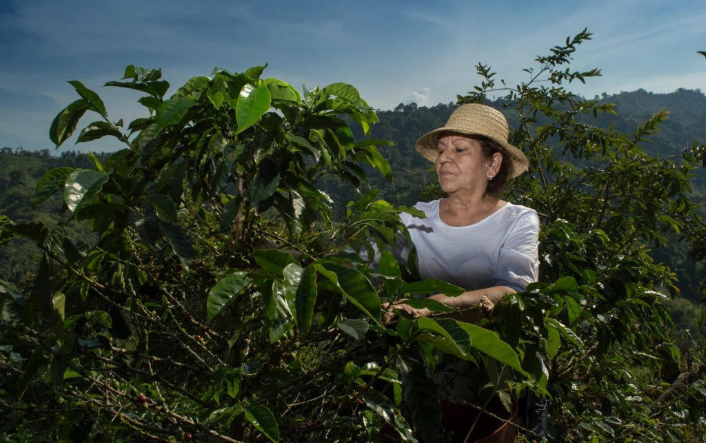 Coffee farmer in Brazil