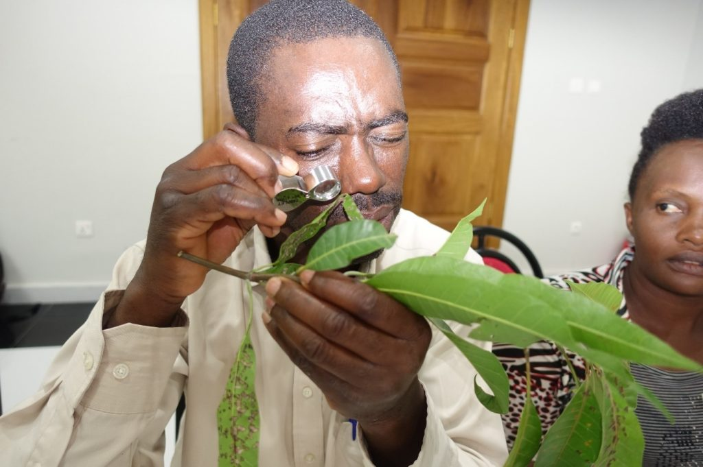 Plant doctor trainer in Burundi
