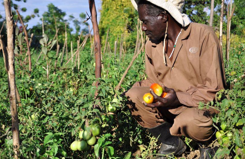 Ugandan farmer