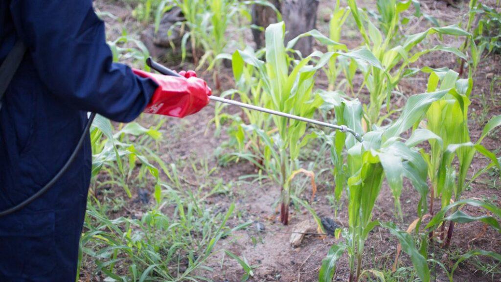 Ethiopia man spraying pesticides