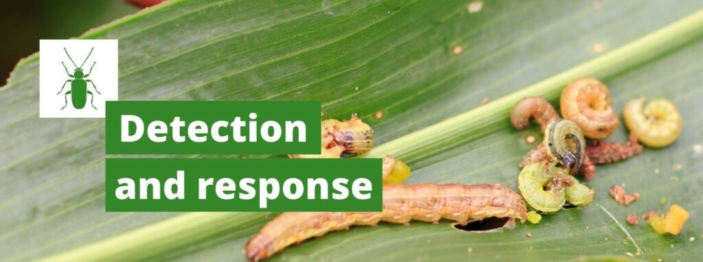 detection and response