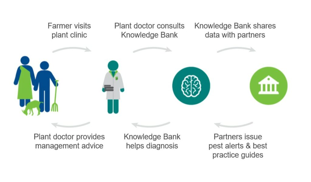 Plantwise Knowledge Bank