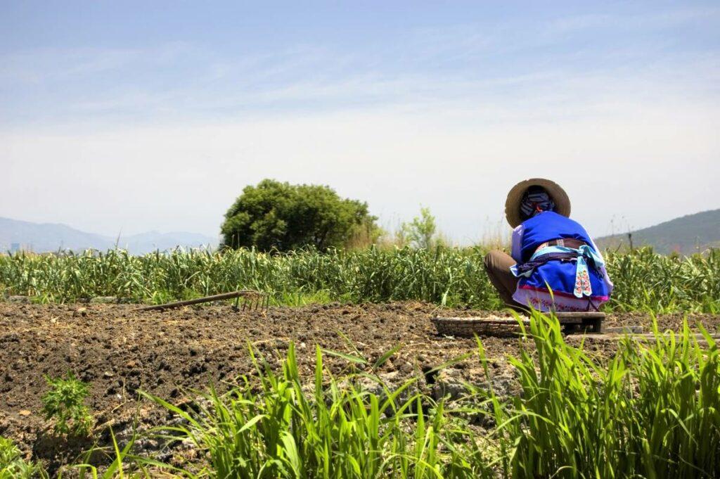 female farmer working in a field